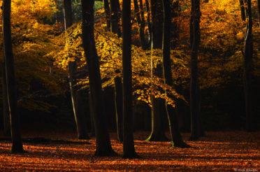 Herfst in het leuvenumse bos