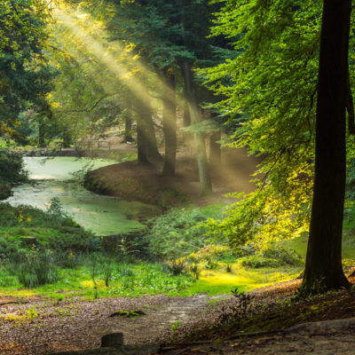 Lichtstralen in het bos van de Posbank