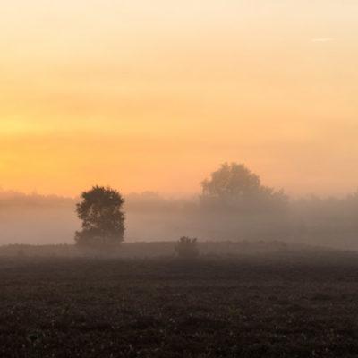 Veluwe renderklippen mist sunrise