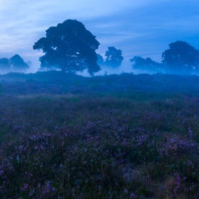 mist heide veluwe