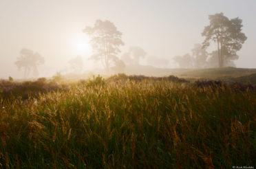 Mist op het Hulshorsterzand – De Veluwe
