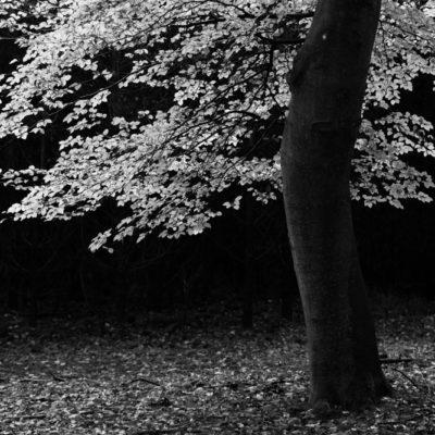 Herfst Leuvenumse Bos