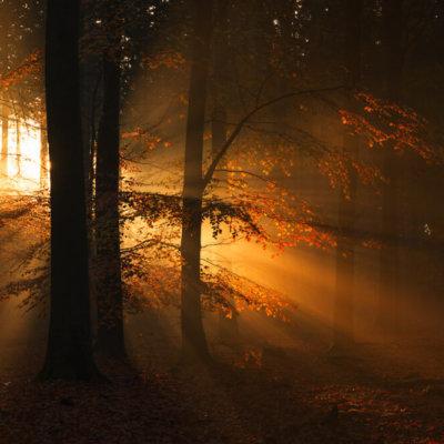 Lichtstralen op de Veluwe
