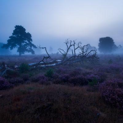 schemering mist veluwe