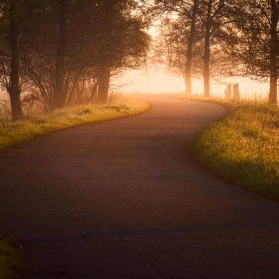 Mist zonsopkomst zwolle