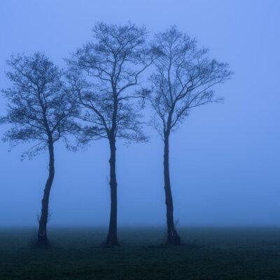 bomen mist polder