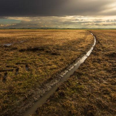 Lijnenspel in de mastenbroeken polder