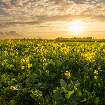 Sunset mastenbroeken polder