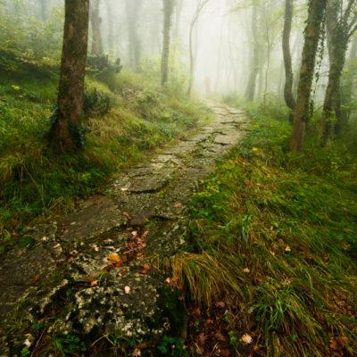 Mist in een bos in San Marino ItaliË