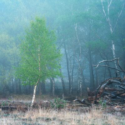 Landschap 'life and death'