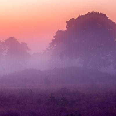 Mist tijdens de zonsokomst op de bloeiende heide