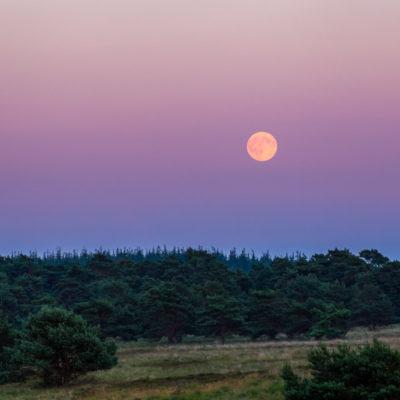 Volle maan opkomst op de Veluwe