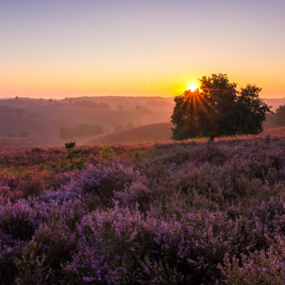 Sunrise posbank veluwe bloeiende heide