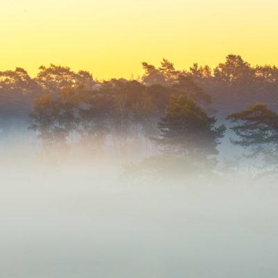 Zonsopkomst met mist op de veluwe