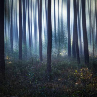 Bos bij tongerense heide veluwe