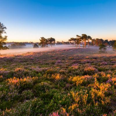 Tongerense heide op de Veluwe tijdens sunrise