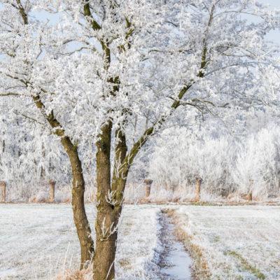 Winterlandschappen in Zwolle