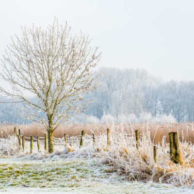 Winterlandschappen in Zwolle