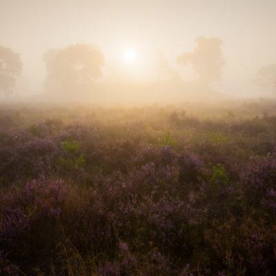 mist veluwe