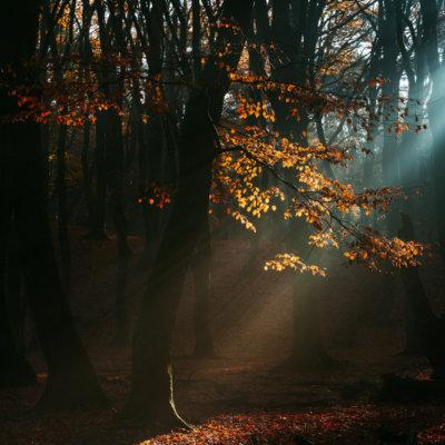 speulderbos lichtstraal