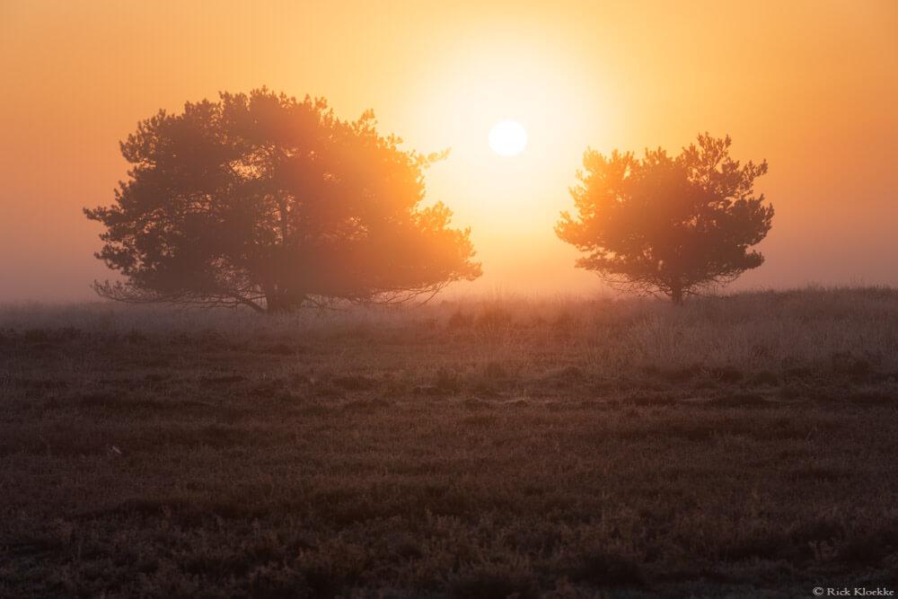 Veluwe zonsopkomst mist